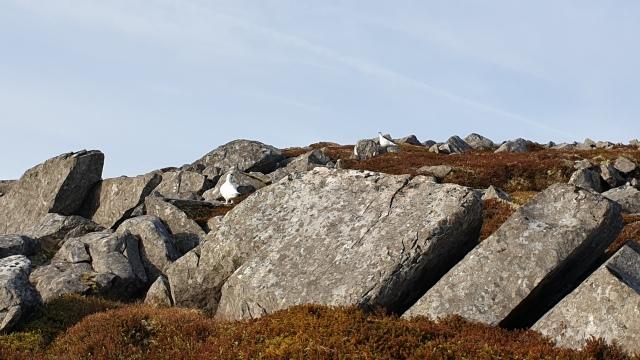 Shiehallion Munro Bagging (3)